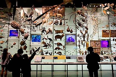 A gallery in the American Museum of Natural History