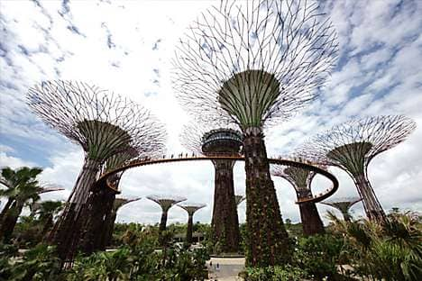 Supertree Grove, with its tree-top walkway, at Gardens By The Bay