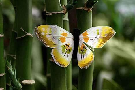 A Yalong Bay butterfly