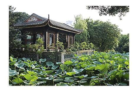 A traditional Chinese pavilion and lotus garden in Guangzhou