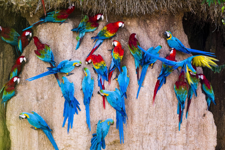 A flock of colourful parrots