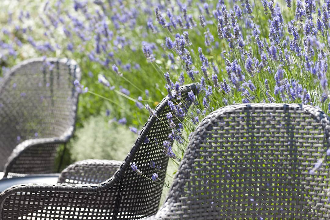 Lavender on the terrace
