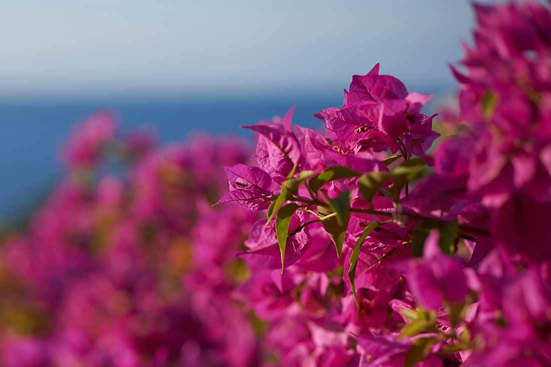 Bougainvillea Suite view of flowers