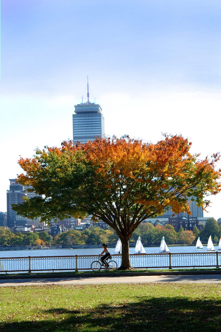 a woman riding bicycle along charles river