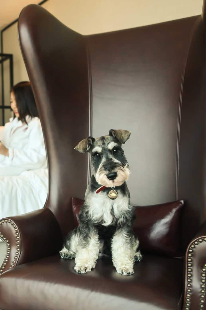 a puppy sitting on a chair
