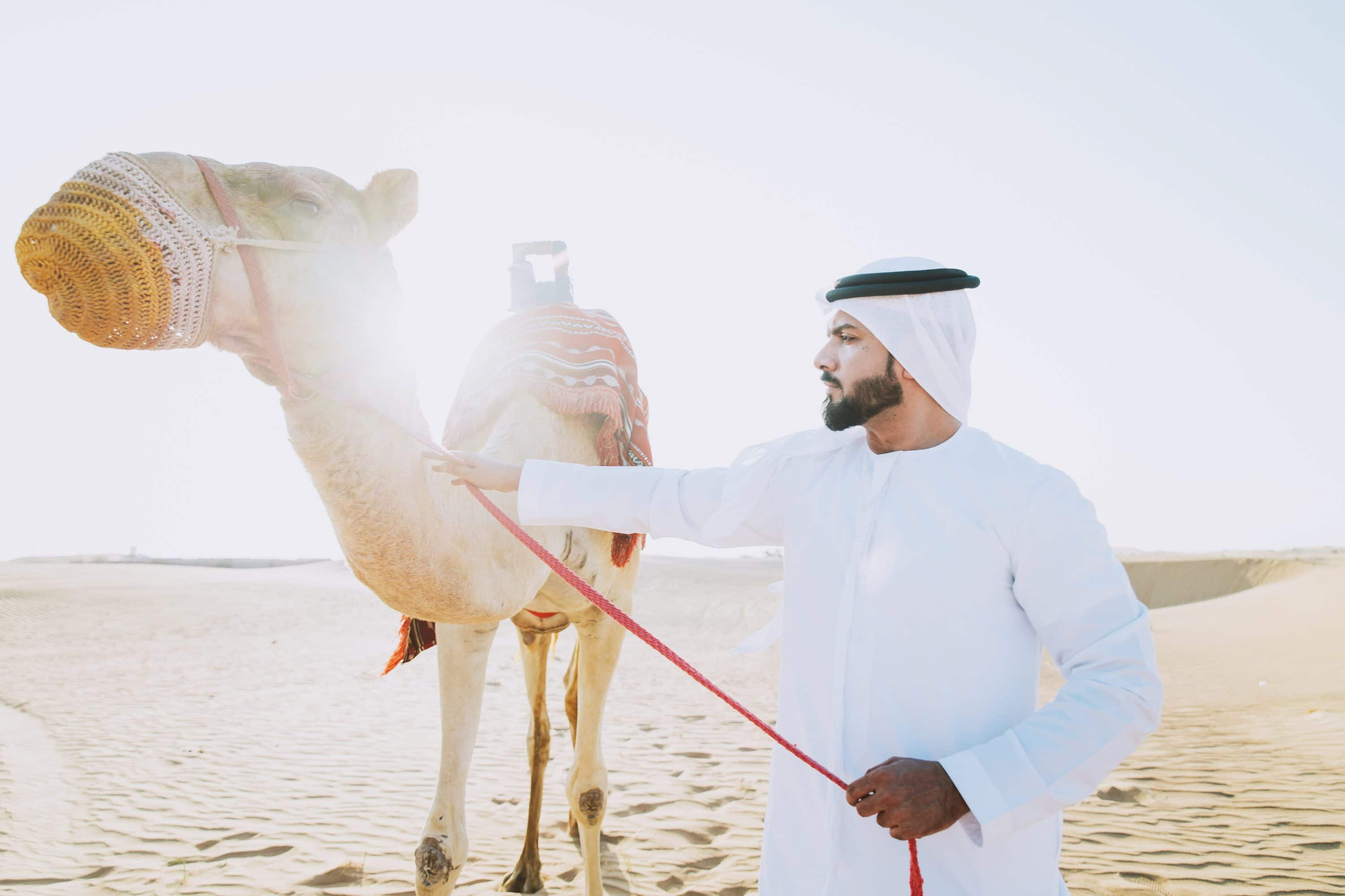Man guiding a camel