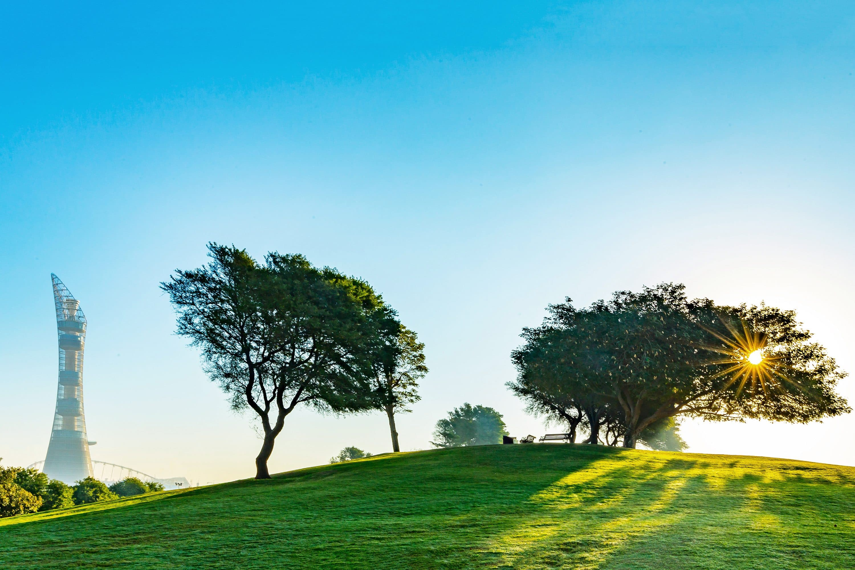 Trees atop a small hill in Aspire Park, Doha