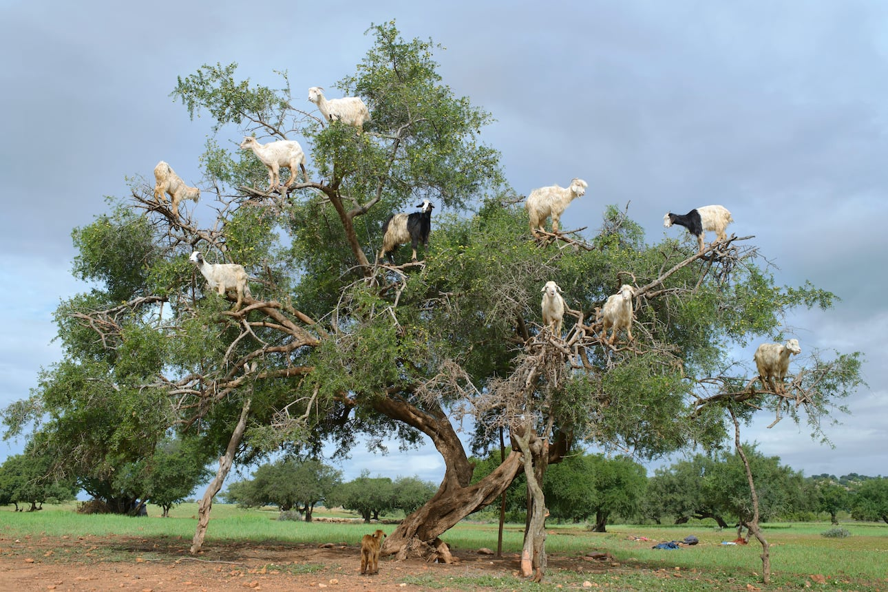 Around the world in five trees