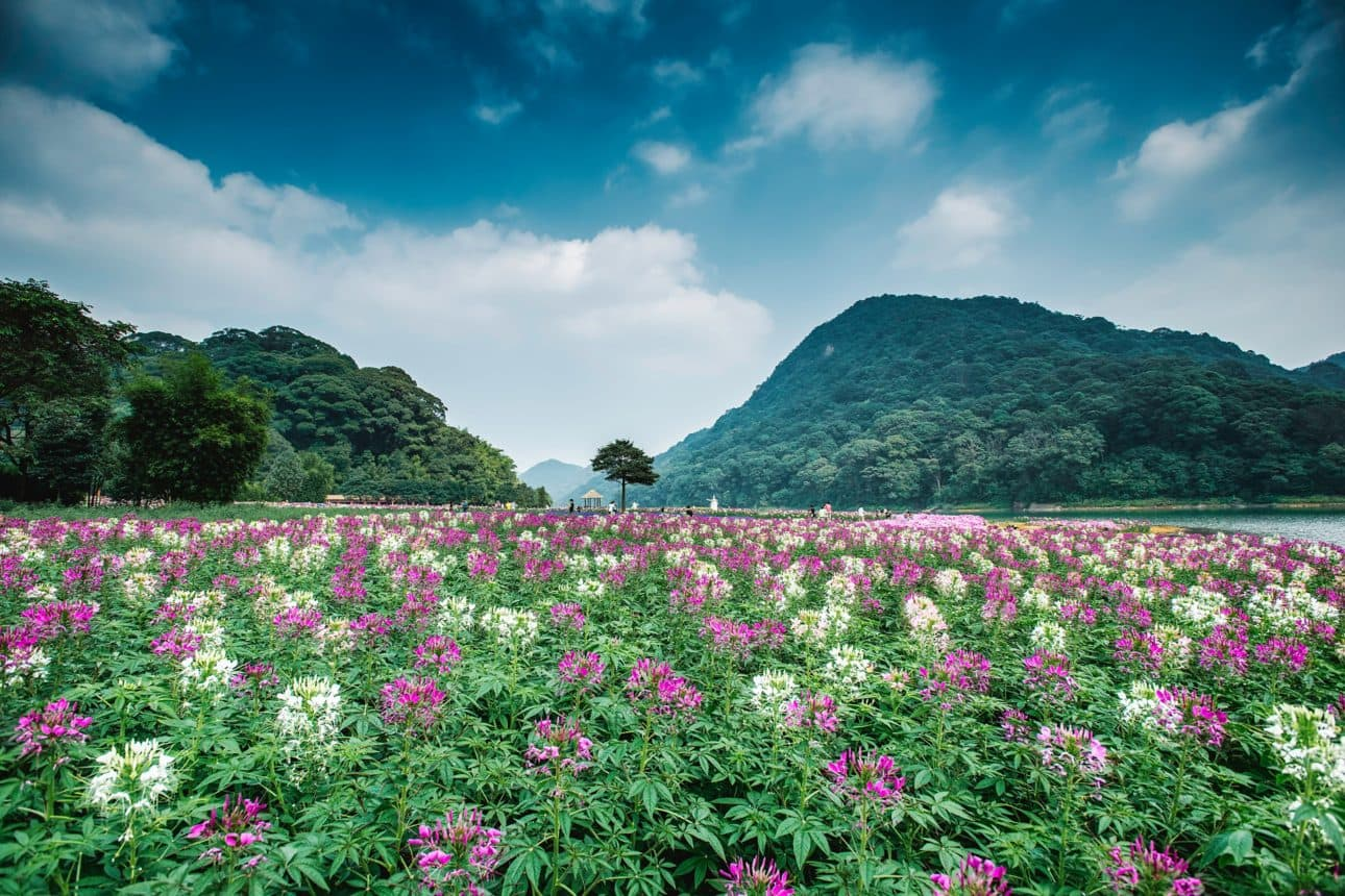 Pink and white flowers at Guangzhou National Forest Park