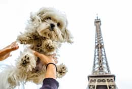 A dog being held in the air with the Eiffel Tower in the background