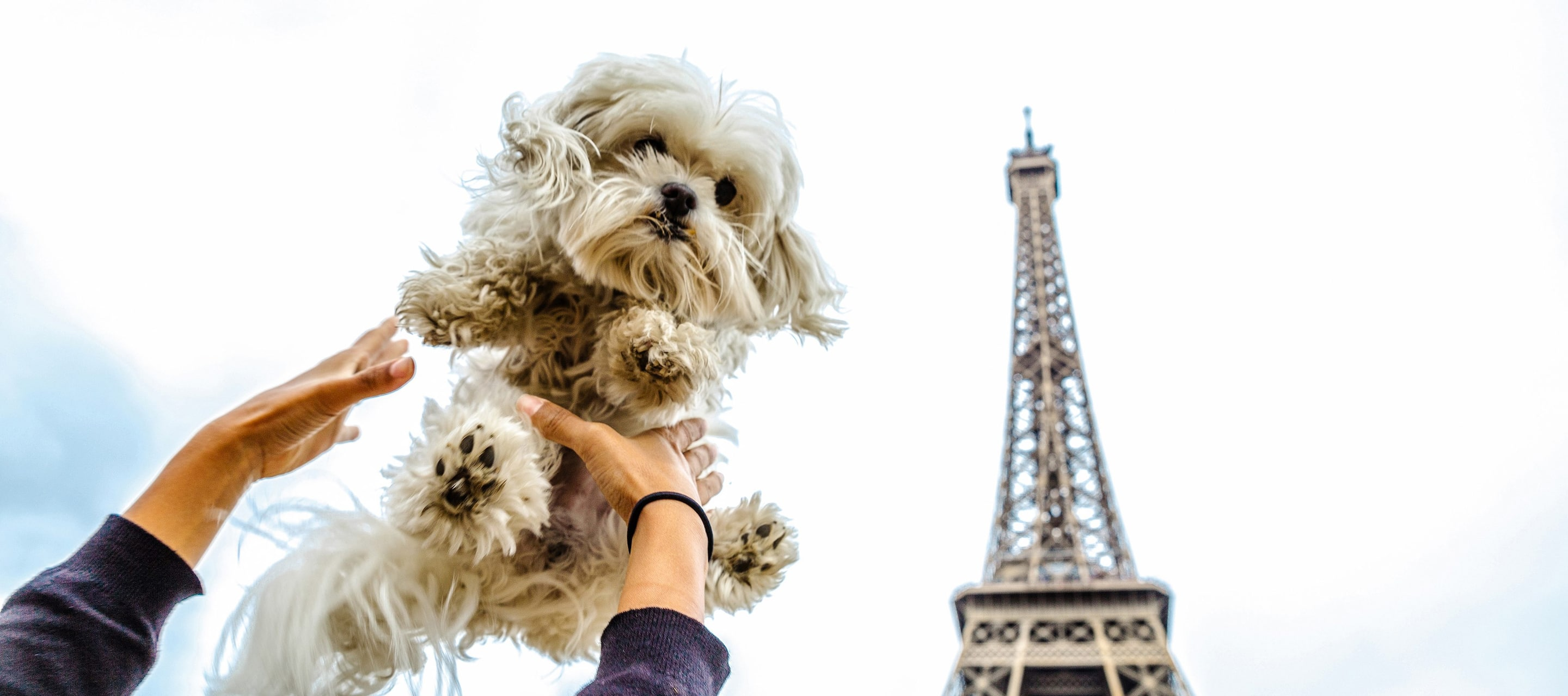A dog's ruff guide to Paris