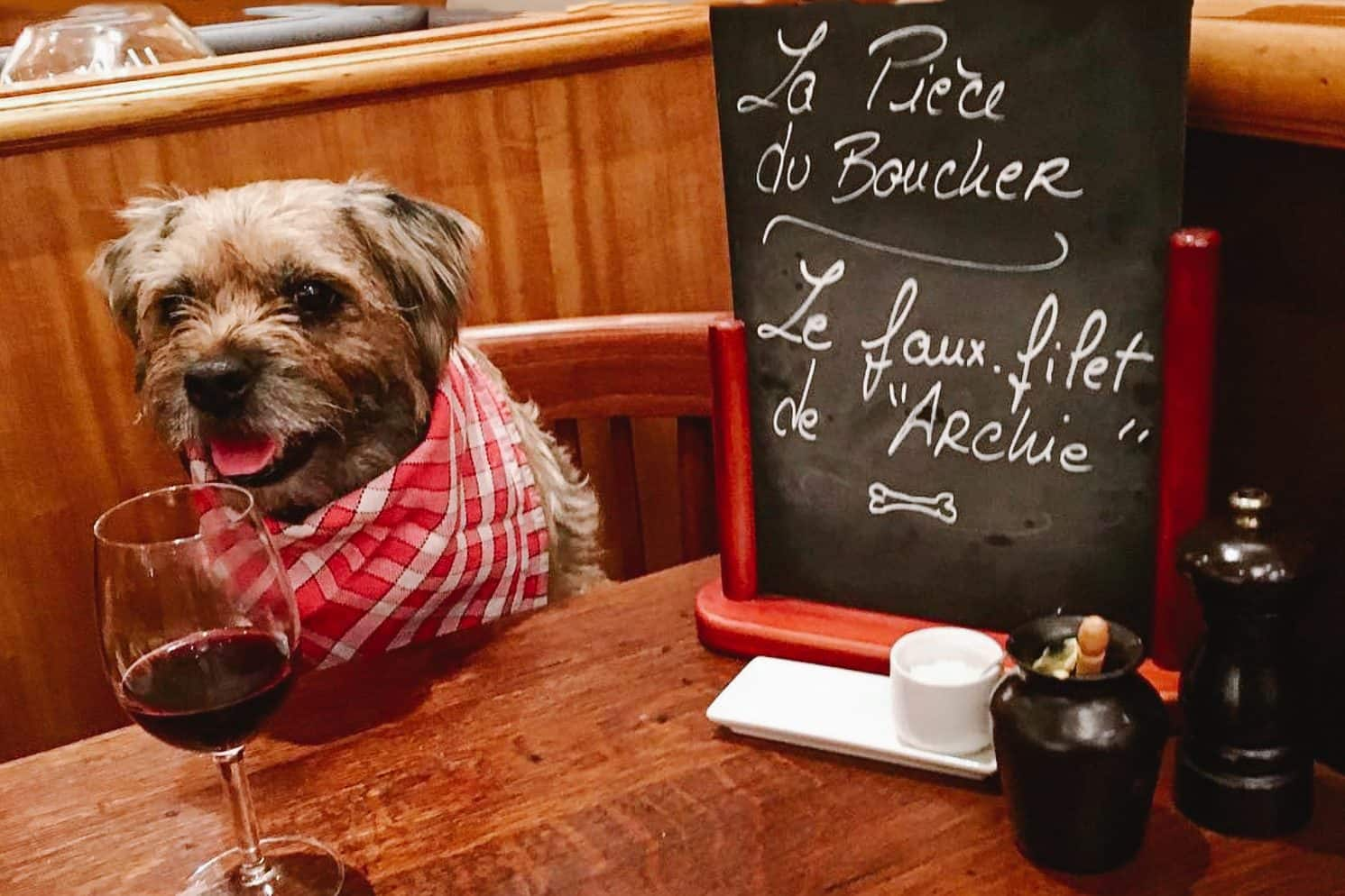 Dog Archie Lewoof sits on a chair at a table at Bistrot Paul Bert with a glass of red wine and a red gingham napkin