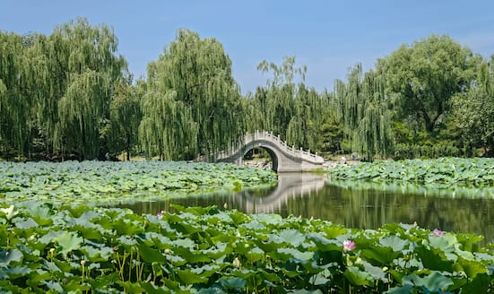 Pond with lily pads and stone bridge