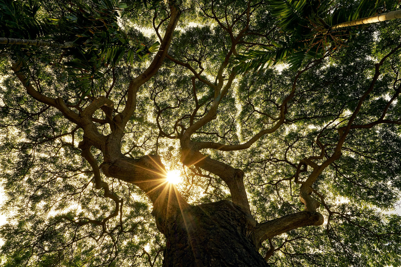 Light breaks through trees