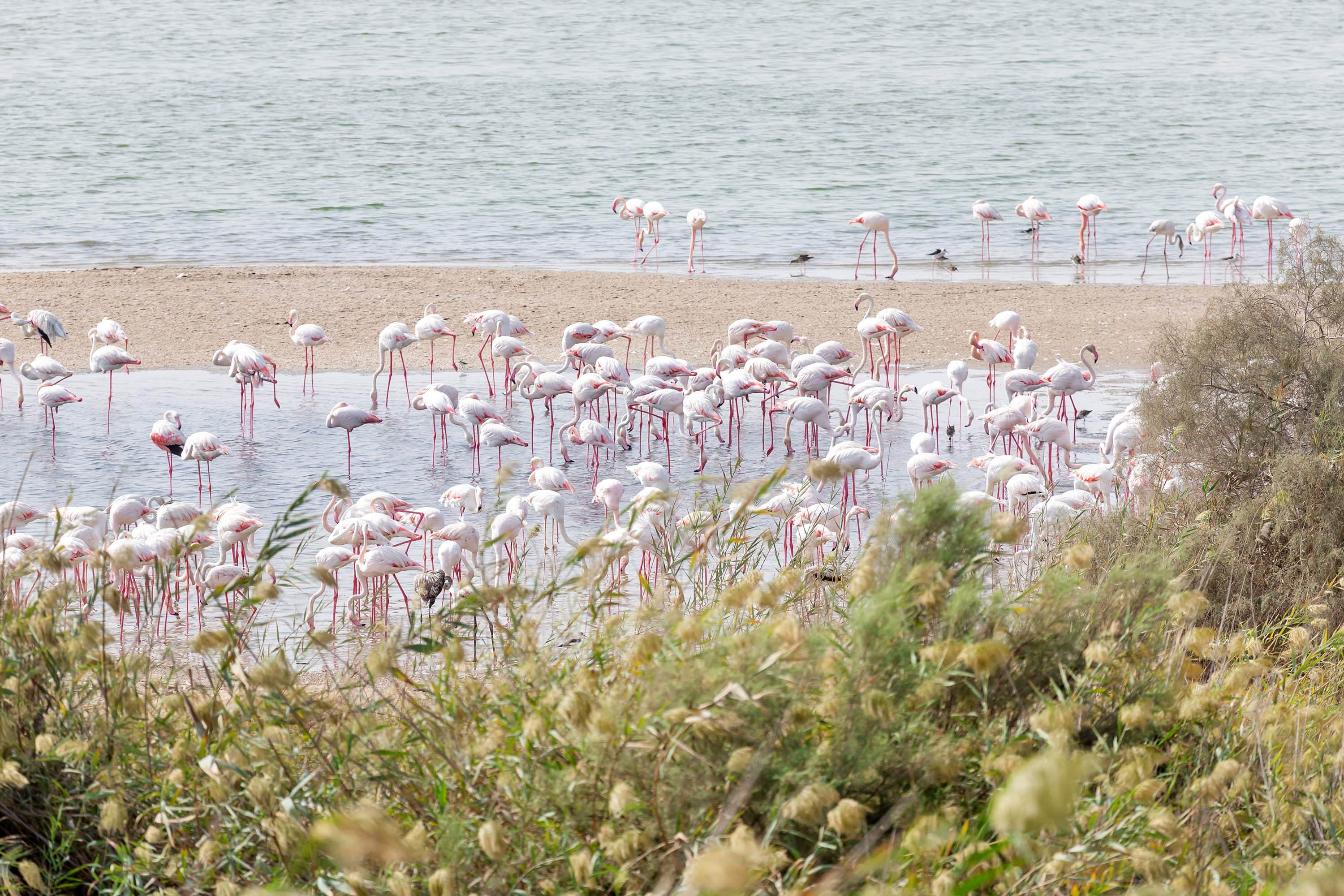 Flamingos on sand by water