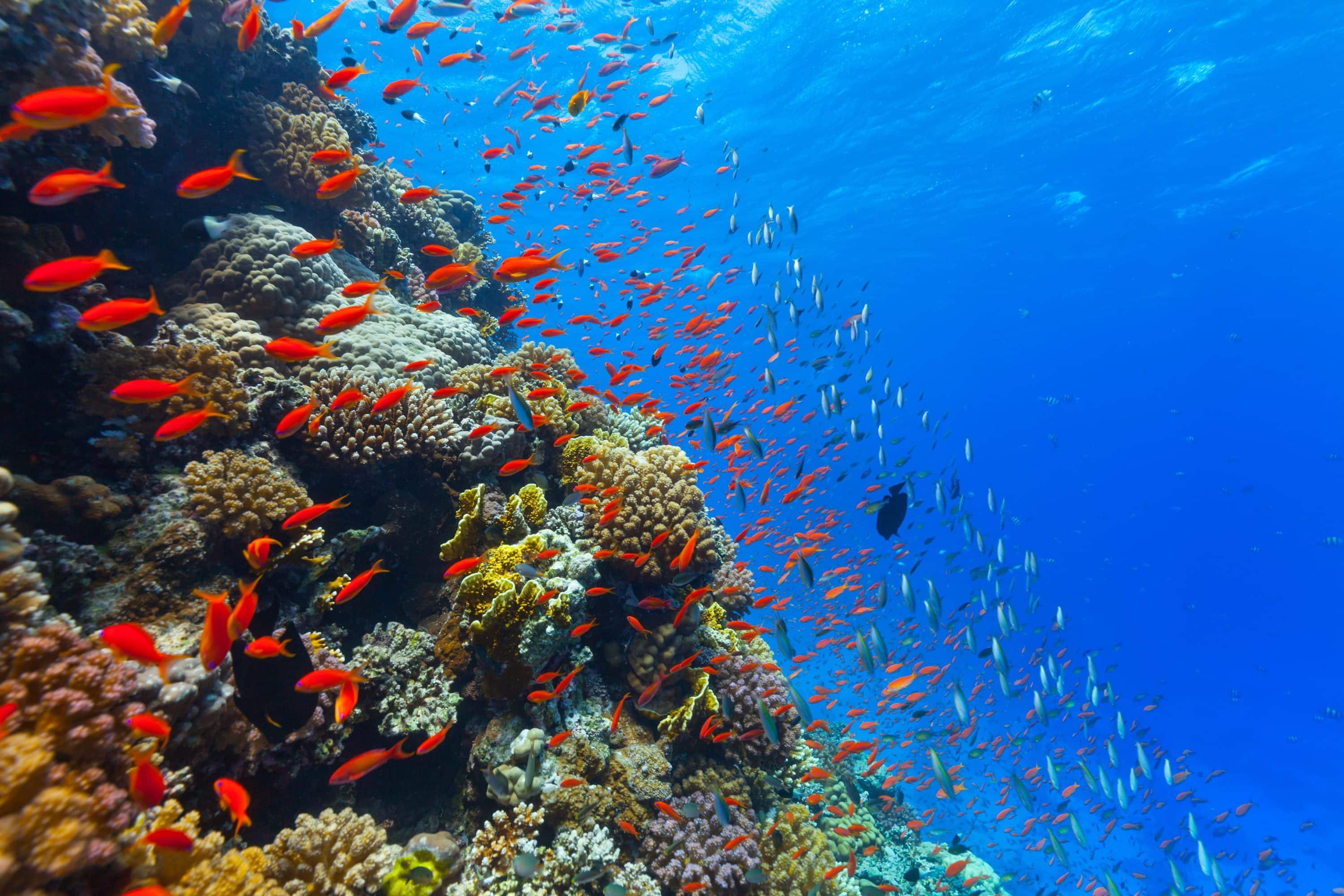 Brightly coloured reef and fish