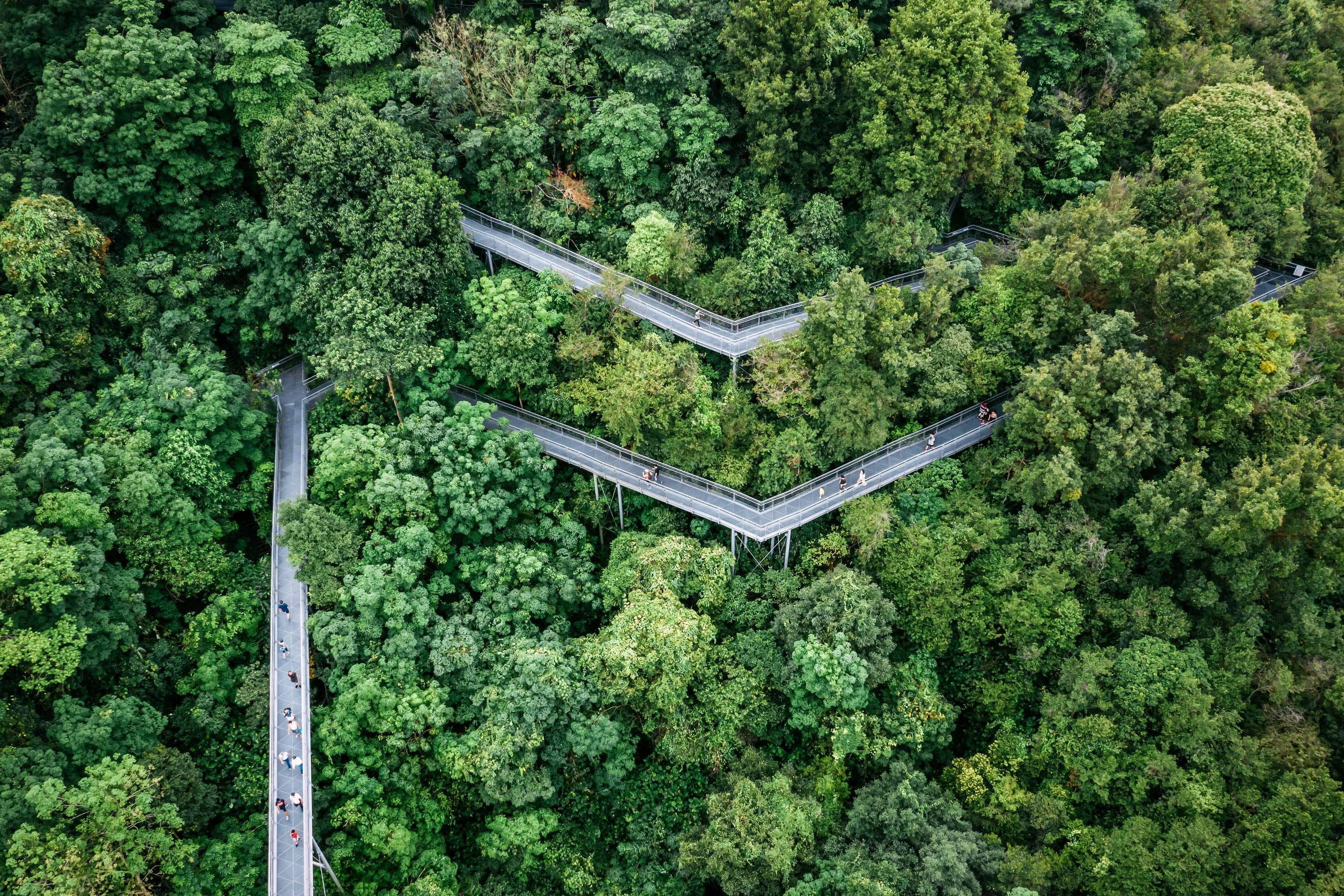 Raised paths appear from the trees canopy at the Southern Ridges, Singapore