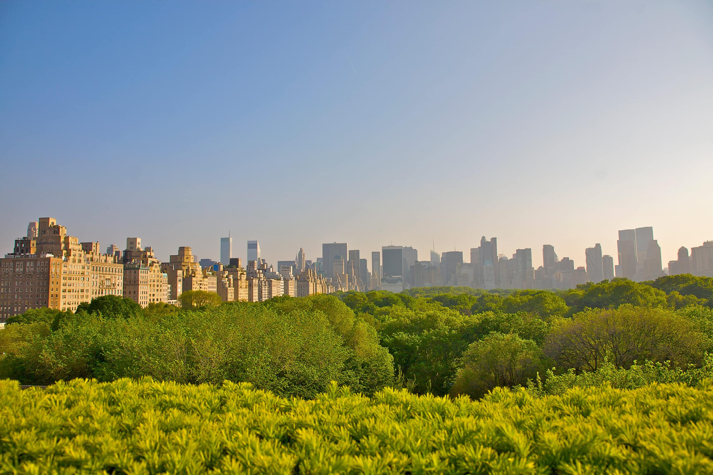 Central Park and the New York skyline