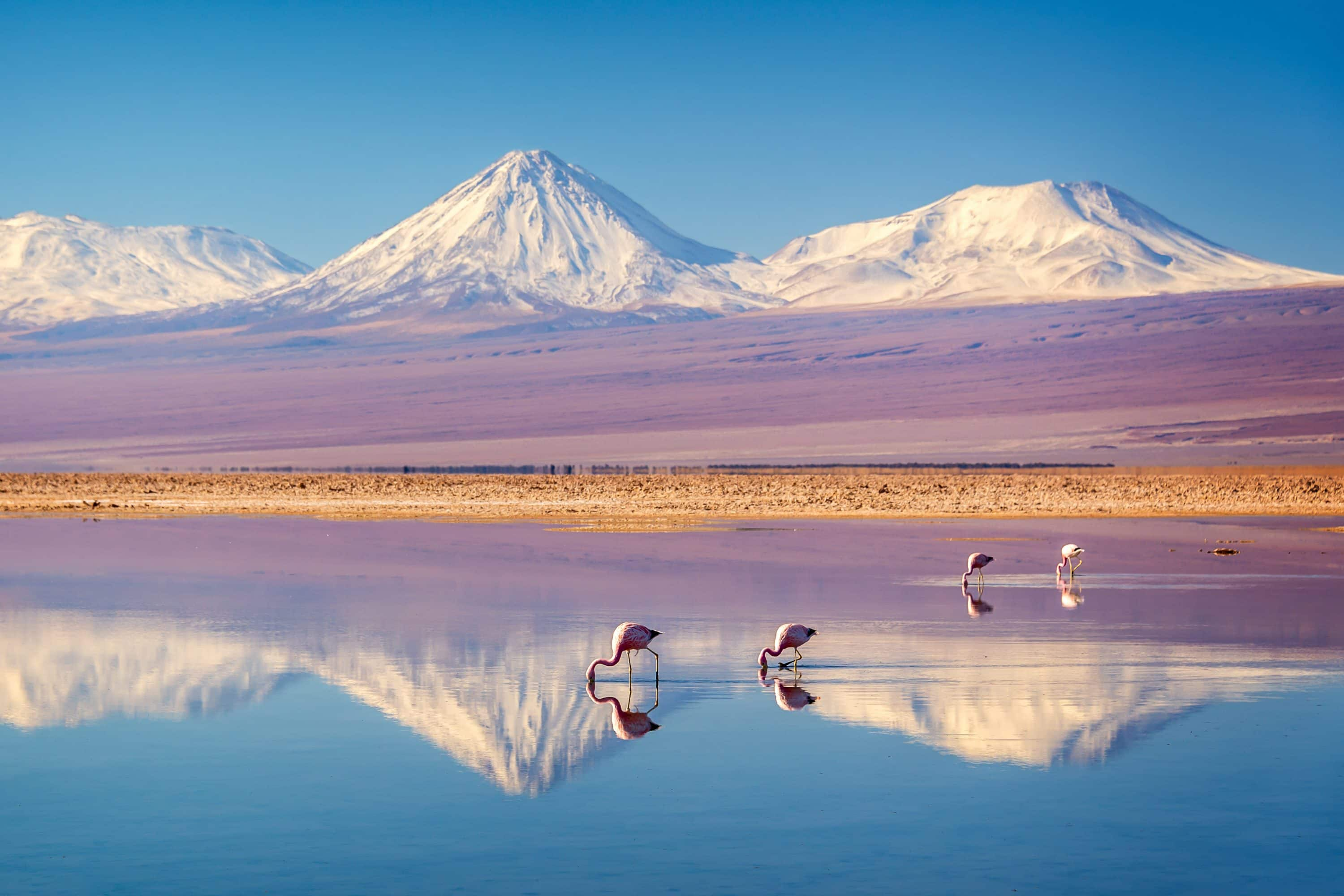 Snow-capped mountains reflected on the lake with flamingos in the Atacama desert