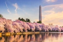 Washington D.C. essential city guide