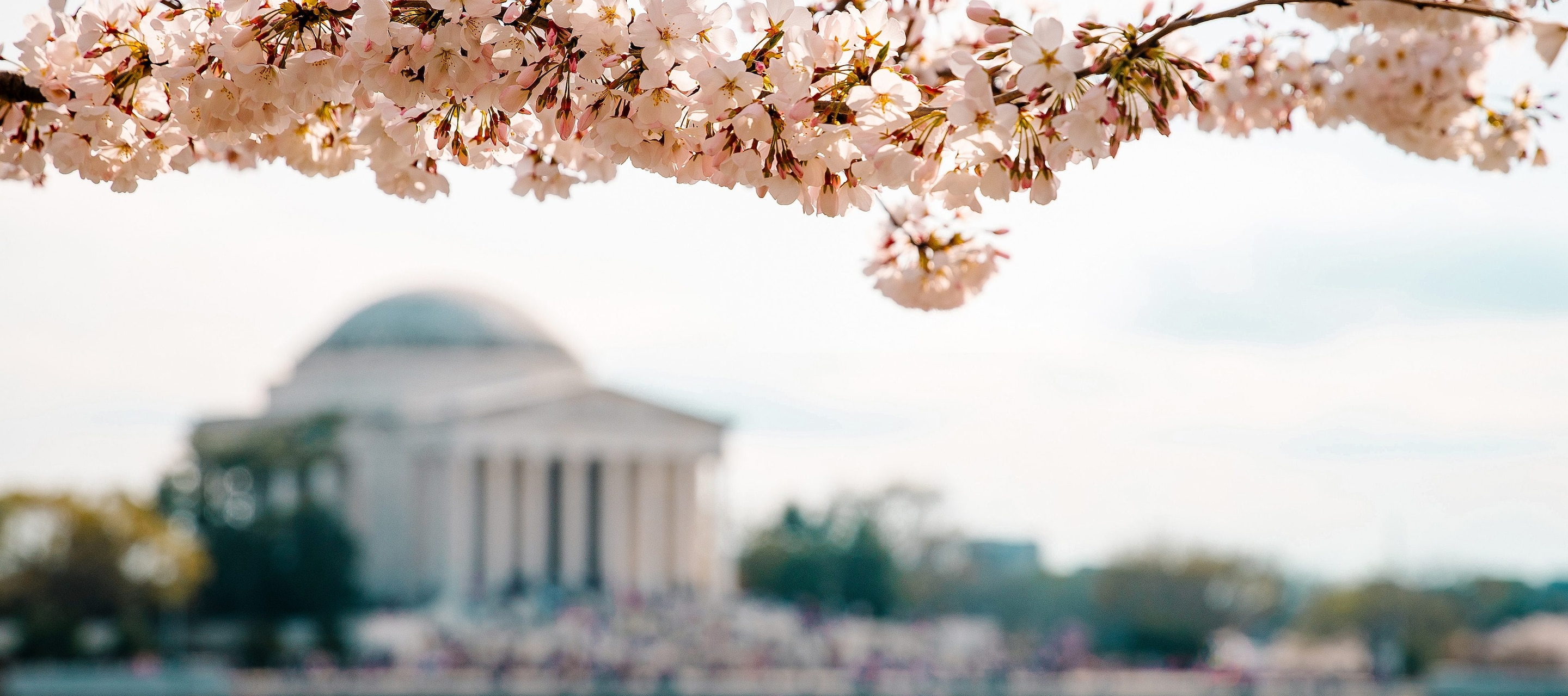 Five ways to travel the world in Washington, D.C.