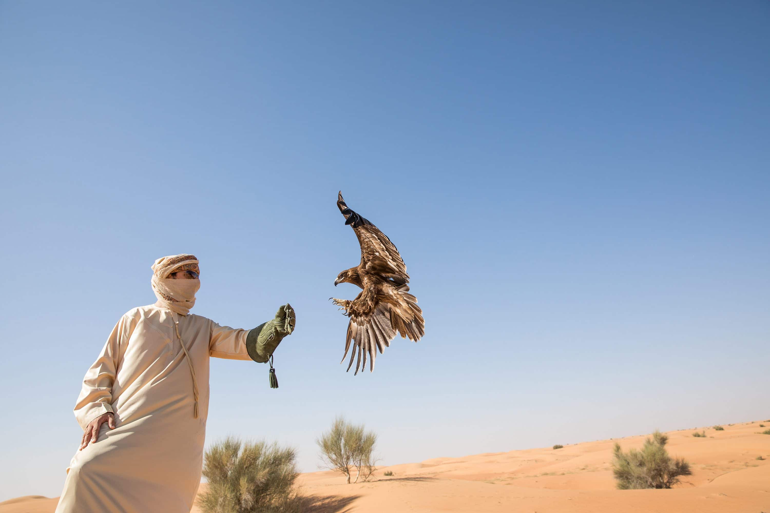 Trainer with falcon in desert
