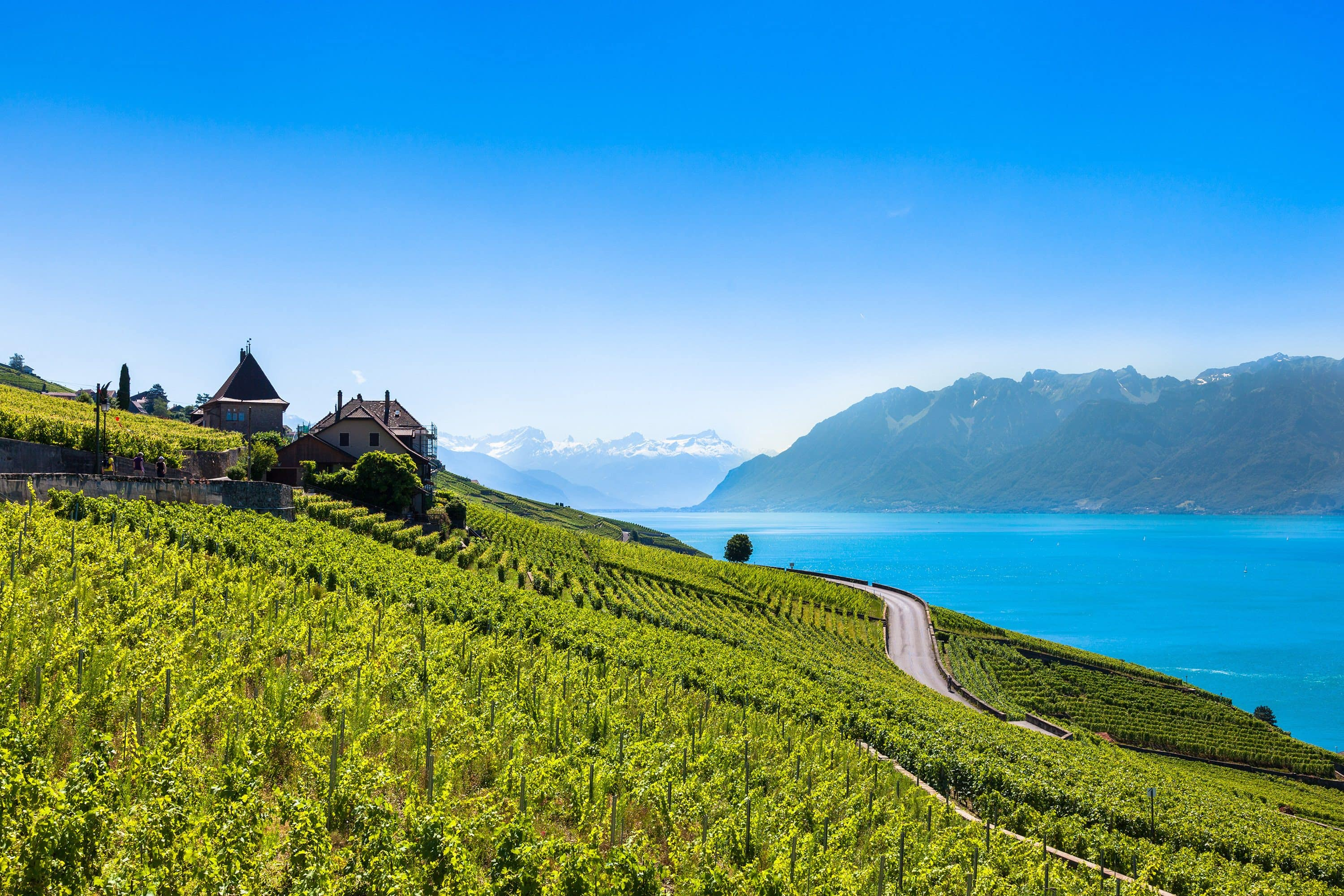 Vineyards and lake near Geneva