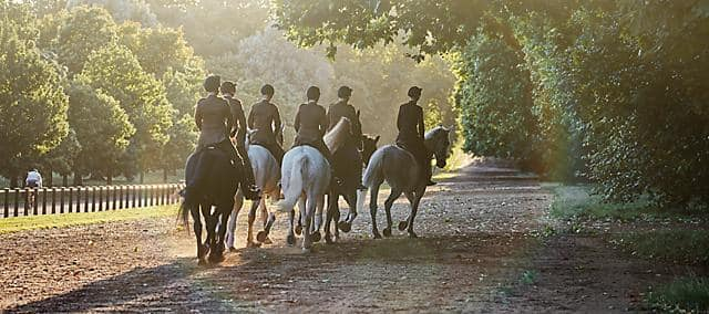 Horses walking through Hyde Park in London.