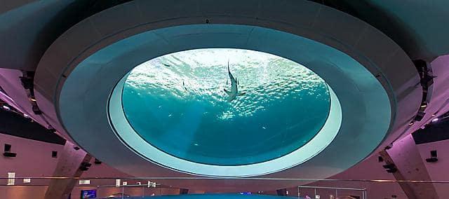 miami aquarium oculus